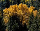 Aspen Colors