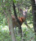Hidden Deep in the Forest