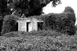 Kudzu covered house