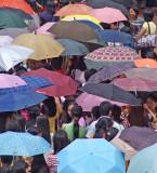A sea of umbrellas