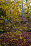 Forest floor in the Red River Gorge.