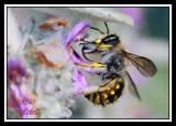 MELISSA BEE-2569.jpg