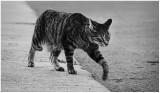 Urban jungle kitty.