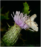 Hungry moth.