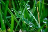 More dew drops.
