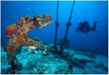 Bonaire, 2009