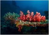 More soft corals.