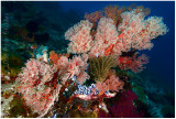 Sea fans and soft corals.