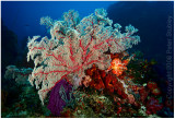 And more soft corals.