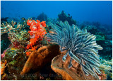 More crinoids and soft coral.