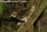 Argentina birds - passerines