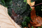 Spiderweb Dew Drops.JPG