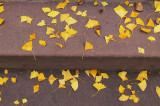 Ginko Leaves on Steps.JPG