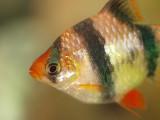 2008-09-21 Fish