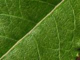 Leaf - 03