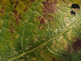 Leaf - 06