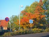 2008-10-08 Fall colours
