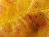 Leaf - 25