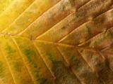 Leaf - 26