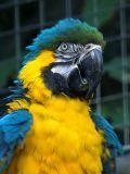 2006-10-01 Big bird