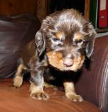 Pups 3.5 weeks 090.jpg