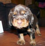 Pups 3.5 weeks 091.jpg