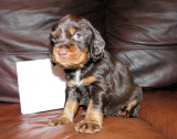 Pups 3.5 weeks 094.jpg