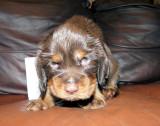 Pups 3.5 weeks 097.jpg