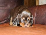 Pups 3.5 weeks 101.jpg