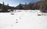 Bear Tracks, Washington Pass Meadow  (WaPass110209-3adj2.jpg)