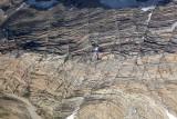 Agassiz Glacier Forefield Detail  (GlacierNP090109-_543.jpg)