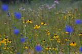 Flower Impressions I