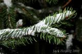 Snow on the Pine Tree