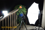 Setup for Lily Photo