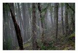 Rain and Mist