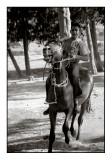 Buy My Horse