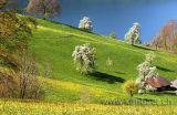 Fruehling / Spring (2540)