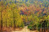 Herbstfarben (0750)