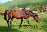 Pferd / Horse (7362)