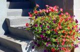 Blumen (5658)