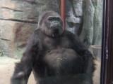 Beijing Zoo.
