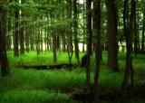Green Undergrowth