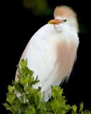 Bird Rookery Images