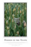 Hidden in the tulips