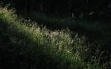 Solstråle i skogen