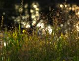 grasses with specular highlights