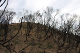 After the bushfires of 2009