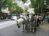Tourist attraction in Melbourne, horse carriges