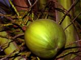Mexico_Coconut.jpg