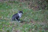 Fussing kat